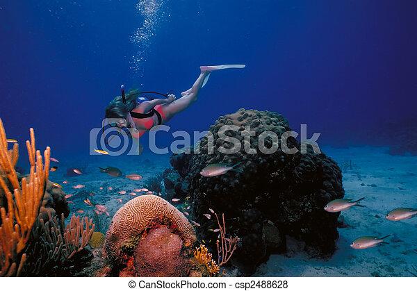 Una chica buceadora en bikini posa sobre el arrecife de coral en las cálidas aguas de la isla de St. Croix en las Islas Vírgenes. - csp2488628
