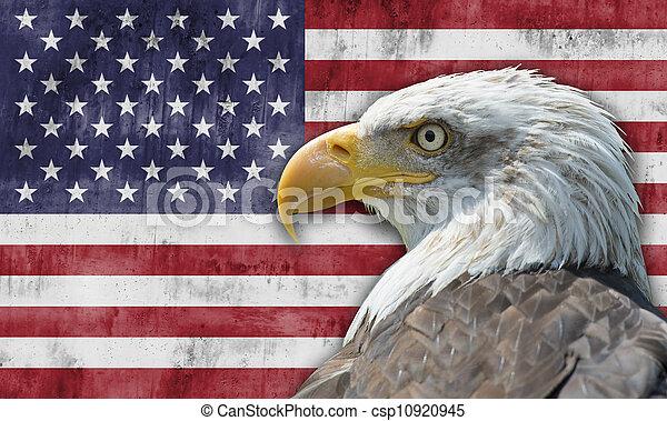 aigle, chauve, drapeau américain - csp10920945