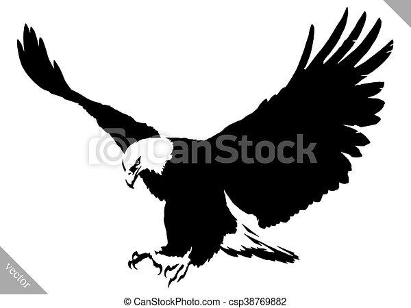 Aigle Dessiner Illustration Peinture Vecteur Noir Oiseau Blanc