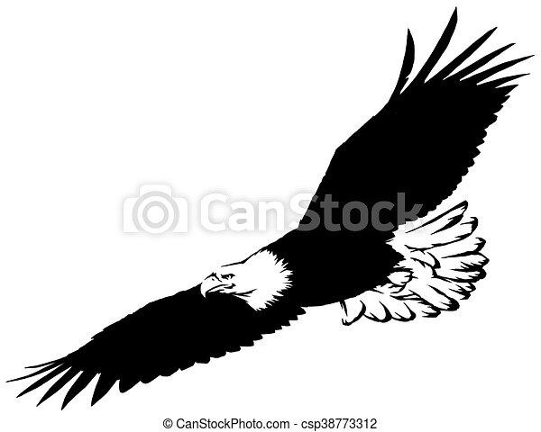 Aigle Dessiner Linéaire Illustration Peinture Noir Oiseau Blanc