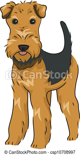 Airedale Terrier - csp10708997