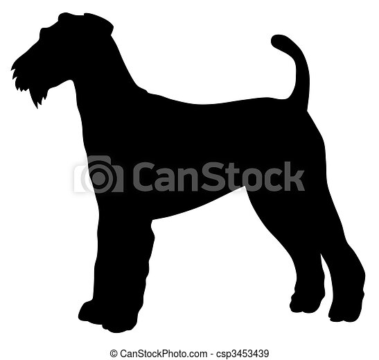 Airedale terrier - csp3453439