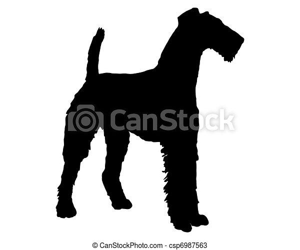 Airedale terrier - csp6987563