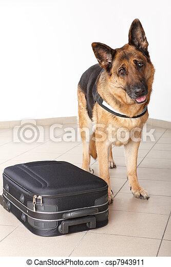 Airport canine - csp7943911