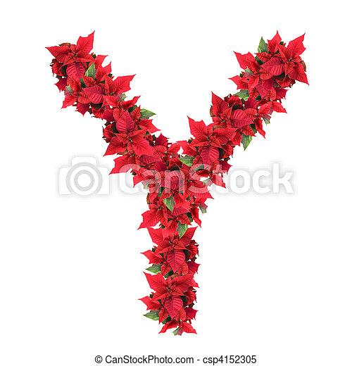 Carta de flores de Navidad rojas aisladas en blanco - csp4152305