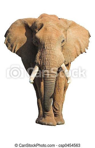Elefante aislado - csp0454563