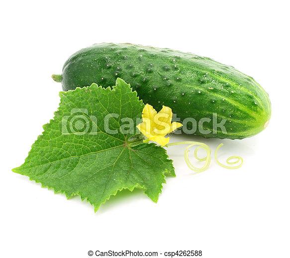 Fruta vegetal de pepino verde con hojas aisladas - csp4262588