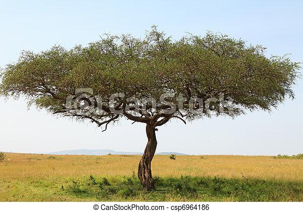 träd i afrika