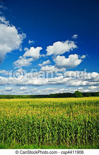 akker, koren, landscape - csp4411906