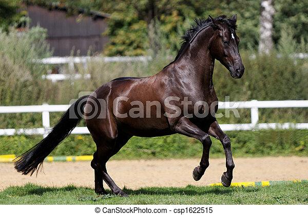 aktiv, pferd - csp1622515