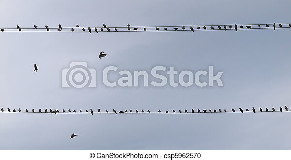 Pájaros conectados - csp5962570