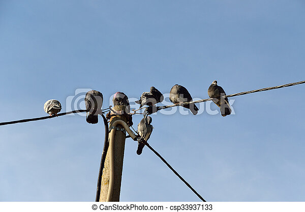 Pájaros al cable - csp33937133