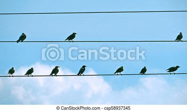 Pájaros al cable - csp58937345