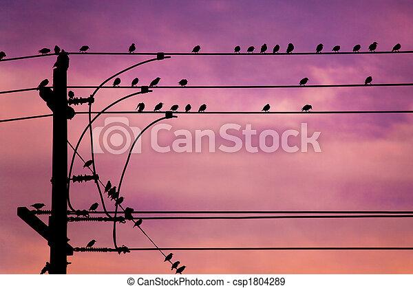 Pájaros conectados - csp1804289