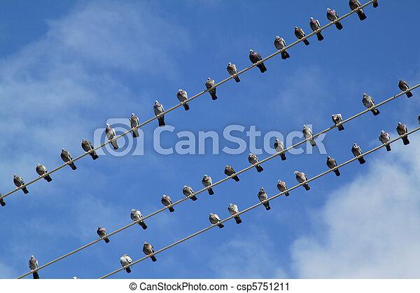 Pájaros conectados - csp5751211