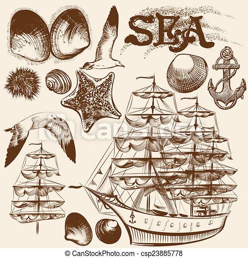 alapismeretek, szüret, gyűjtés, kéz, téma, tenger, húzott - csp23885778