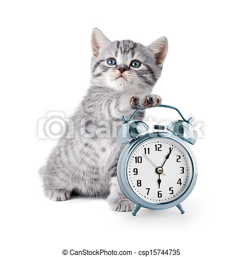 Un gatito adorable con despertador - csp15744735