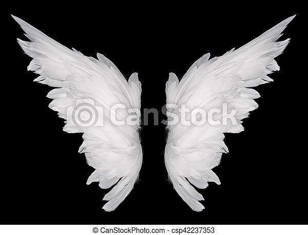Wings - csp42237353