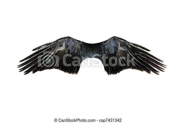 Wings - csp7431342