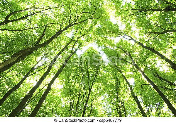 alberi verdi - csp5487779