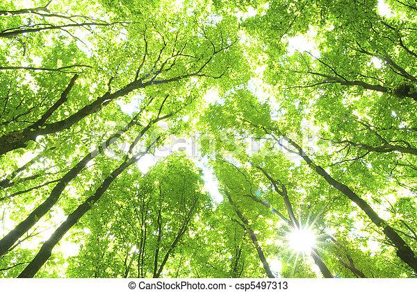 alberi verdi - csp5497313