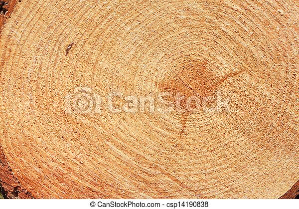 albero abete, taglio, anelli, frescamente - csp14190838