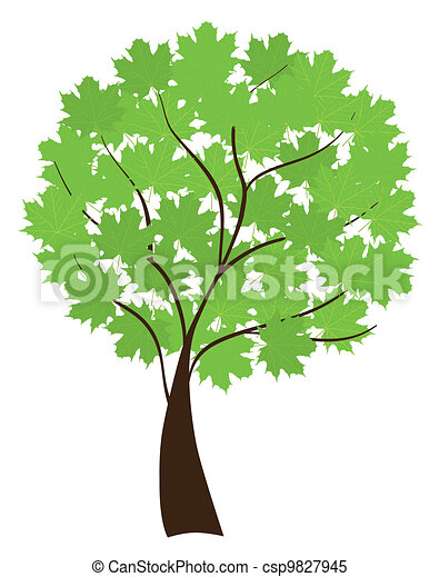 albero, acero - csp9827945