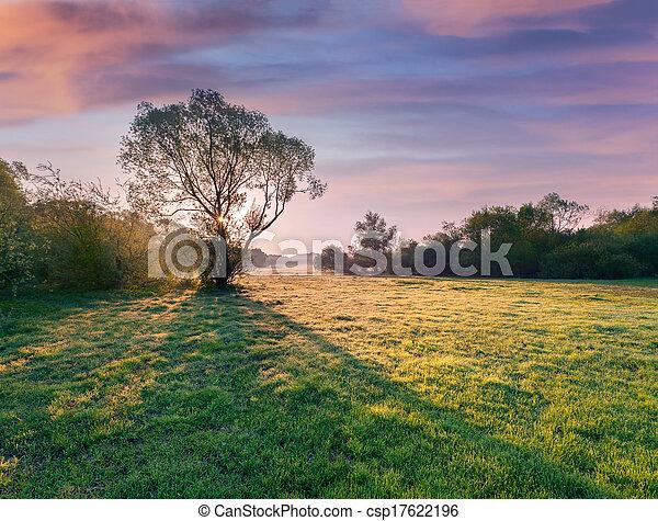 albero, alba, silhouette - csp17622196