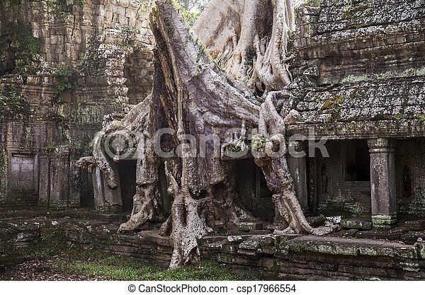 albero, can, tempio, spung, preah - csp17966554