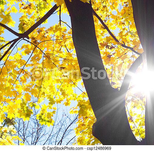albero, contro, silhouette, sole - csp12486969