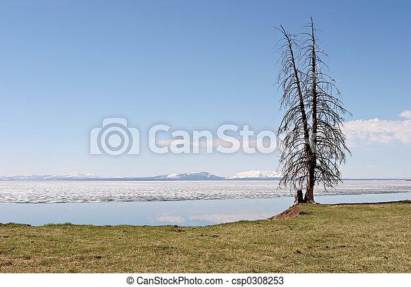 albero, lago yellowstone - csp0308253