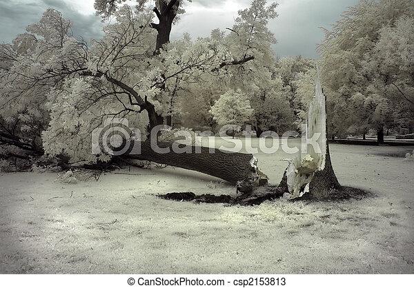 albero rotto - csp2153813
