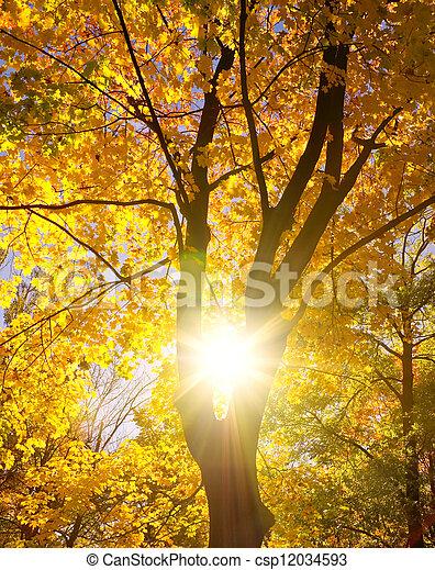 albero, silhouette, contro, sole - csp12034593