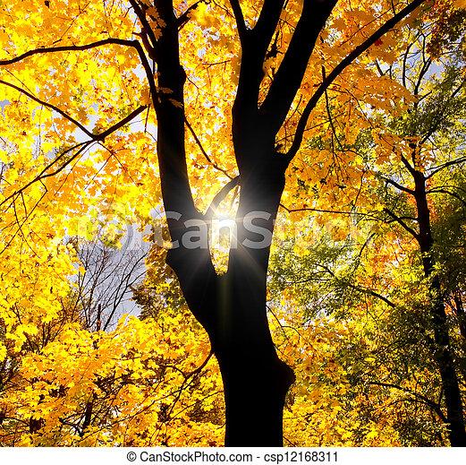 albero, silhouette, contro, sole - csp12168311