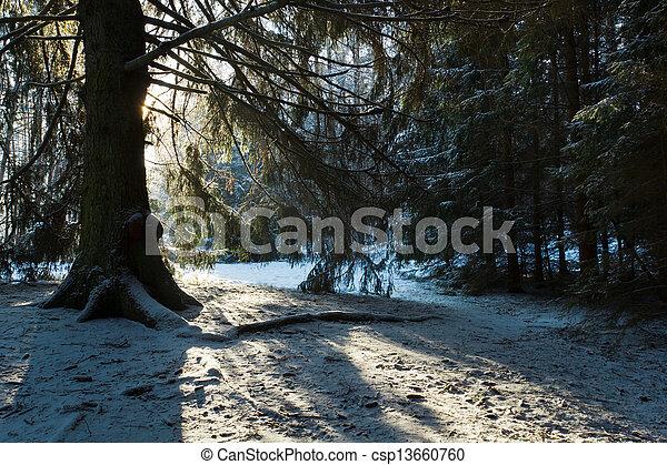 albero, silhouette, inverno, foresta - csp13660760