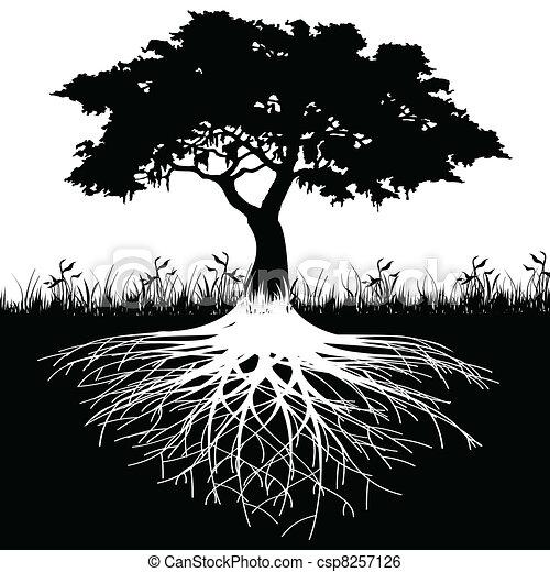 albero, silhouette, radici - csp8257126