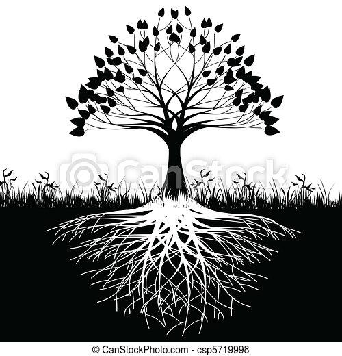 albero, silhouette, radici - csp5719998
