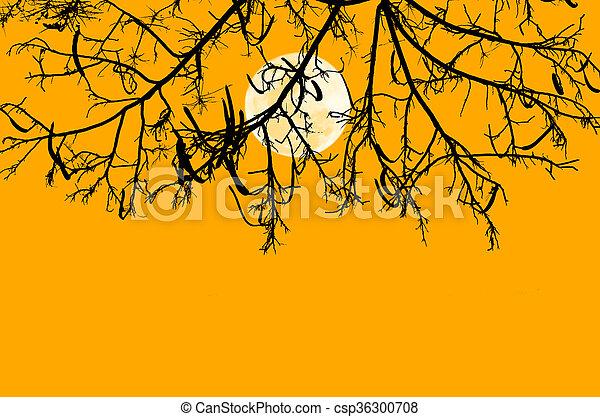 albero, silhouette, ramo - csp36300708