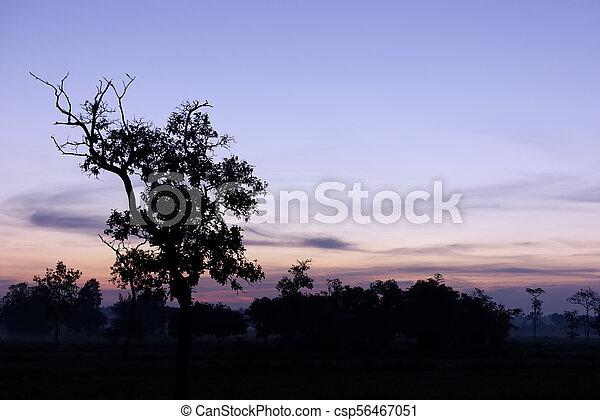 albero, sky., silhouette, crepuscolo - csp56467051