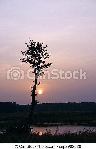 albero, sole, silhouette, contro, venuta - csp2902620