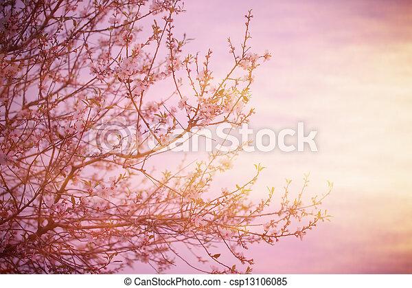 albero, sopra, tramonto, azzurramento - csp13106085