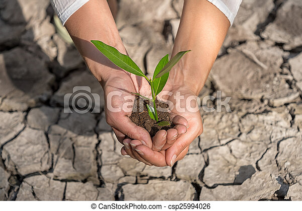 albero, tenere mani, crescente, terra, fesso - csp25994026