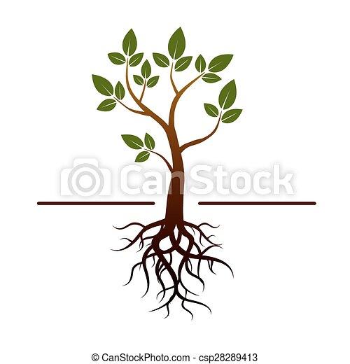 albero, vettore, verde, radici, mette foglie - csp28289413