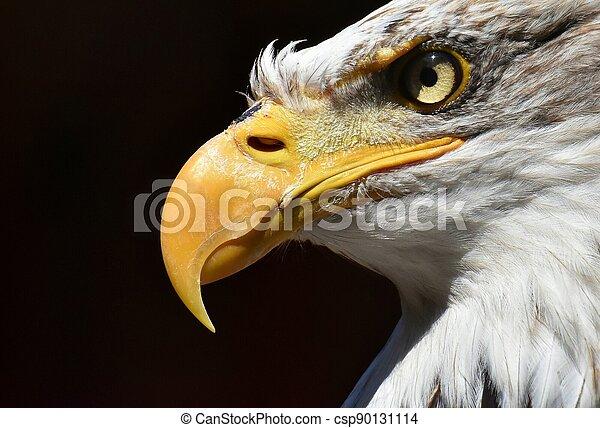 alder closeup - csp90131114