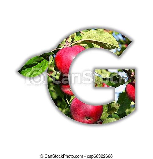 alfabeto, feito, fruta, fresco - csp66322668