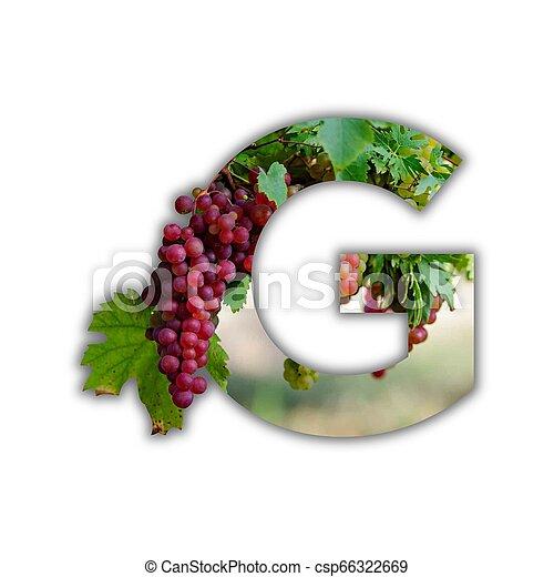 alfabeto, feito, fruta, fresco - csp66322669