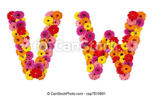 alfabeto, isolado, -, v, letra, flor, w, branca - csp7810691