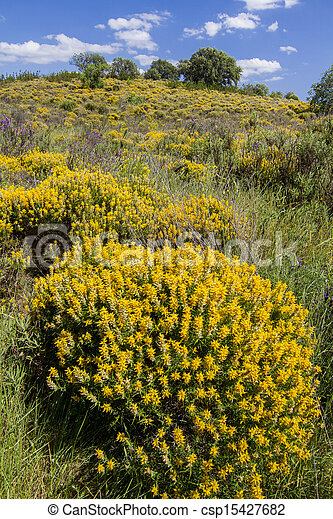 Algarve Countryside Hills With Yellow Bushes In Spring Beautiful