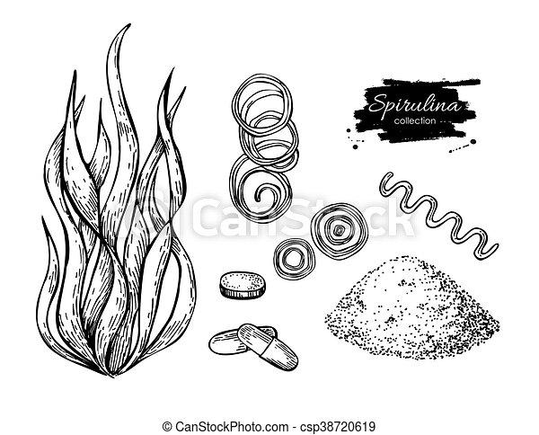 Alghe Spirulina Isolato Mano Alga Vector Disegnato Pillole
