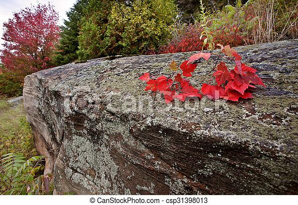 Algonquin Park Muskoka Ontario - csp31398013